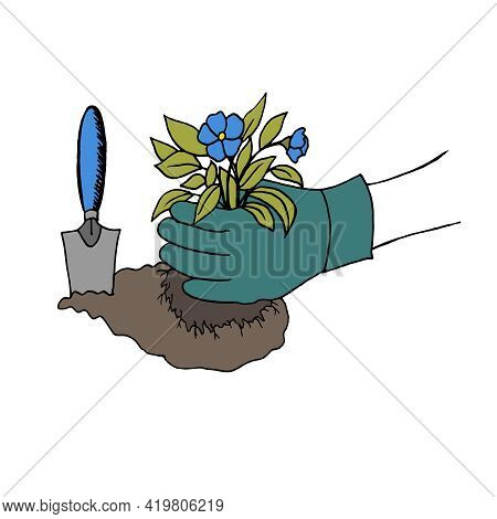 The Gloved Hands Of A Woman Plant A Beautiful Flower In The Ground. Garden Spring Work On The Suburb