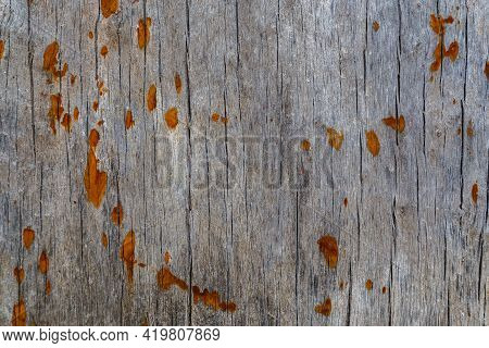 Old Gray Wood Macro Texture With Rusted Spots