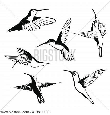 Black And White Hummingbird Vector Illustration Bundle Set