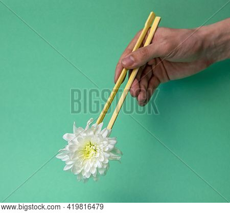 White Chrysanthemum Flower In Young Hands With Chopsticks. Minimal Understanding Of Nature. Advertis