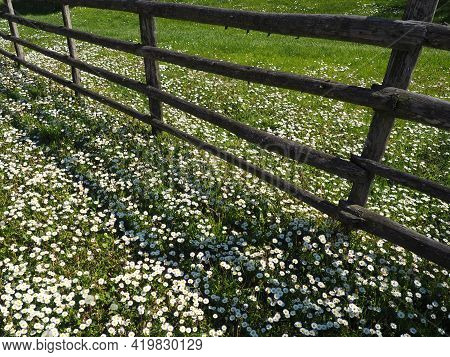 Fence In The Field. Wooden Rustic Fence In A Clearing With Green Grass And White Daisies. Peasant Vi