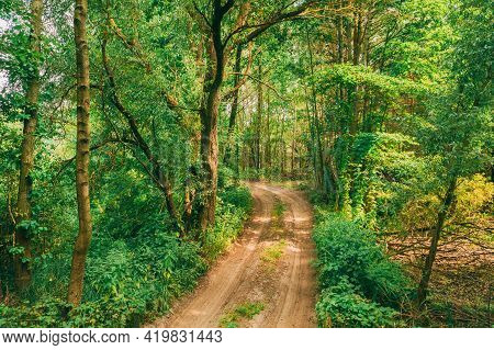 Fairy Forest Lane Road Way Path Through Summer Green Deciduous Forest. European Nature.