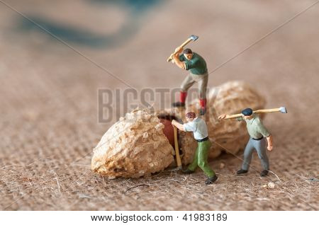 Group Of Lumbermen Trying To Open A Peanut