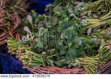 Close-up Green Plant For Background, Green Fenugreek  Texture . Green Leaves Form A Natural Shape. F