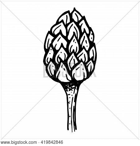 Artichoke Or Flower Bud, Black And White Illustration