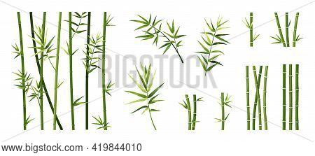 Bamboo Leaf And Stick. Cartoon Tropical Trees Trunks. Green Asian Plants. Straight Segmented Stems A