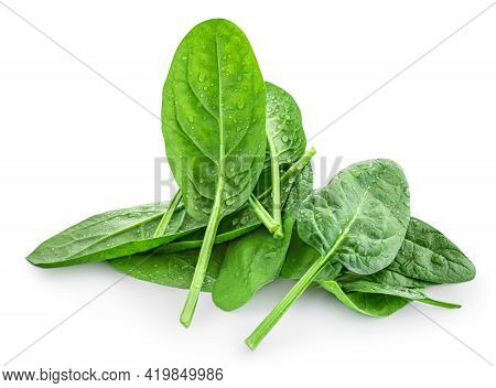 Spinach Leaves Isolated On White Background. Pile Of Fresh Green Baby Spinach, Side View.