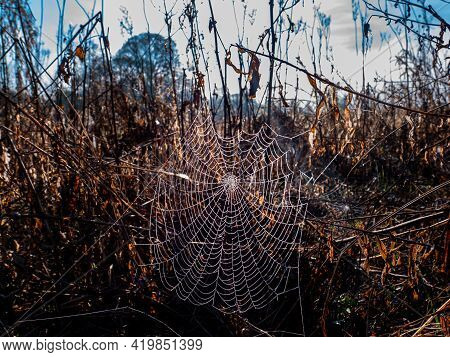 White Spider Web Of Insect With Water Drops. Spider Webs. Morning Dew. Rainwater Drops. Insect Trap.
