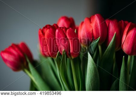 Bouquet Of Tulips Beautiful Red Rose With Background Fresh Flower Natural Bouquet Single Flower Leaf