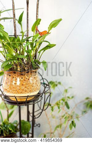 Homemade Green Plants In A Brown Pot On The Balcony In A Metal Stand Under Artificial Light