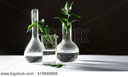 Test Tubes Flasks And Petri Dishes, Laboratory Glassware. Medicine And Biological Or Chemical Resear
