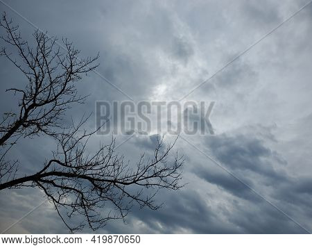 Silhouettes Of Bare Tree Branches Against Blue Overcast Sky In Moonlight. Halloween Haunted Forest C