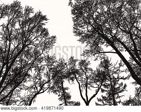 Landscape Illustration Of Silhouettes Trees In Woodland In Cold Season