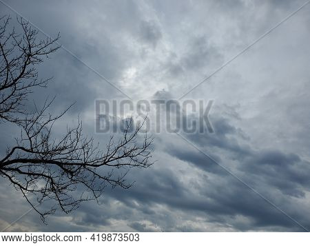 Silhouette Of Bare Tree Branches Against Blue Moody Sky. Halloween Background With Copy Space