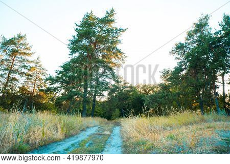 Forest Landscape With Coniferous And Deciduous Trees. Great Place To Walk. Road In Woodland Between
