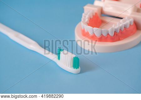 Close Up White Handle Toothbrush And Plastic Human Teeth Model Placed On A Blue Background. Dental E