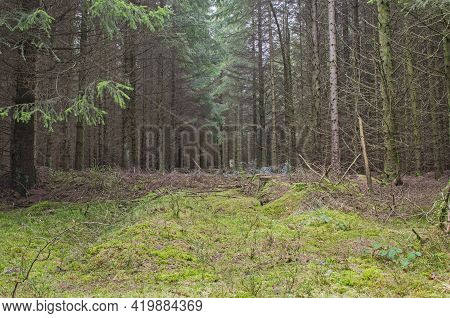 Scenic View Through A Remote Woodland Forest In Rural Countryside Landscape In Winter