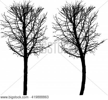 Drawing Of Silhouette Bare Deciduous Tree In Cold Season