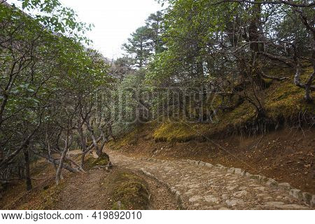 Trail In Forest In The Himalayas Near Tengboche, Nepal
