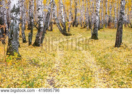In The Autumn Forest, The Road Is Covered With Fallen Leaves And Goes Into The Forest. Autumn Birch