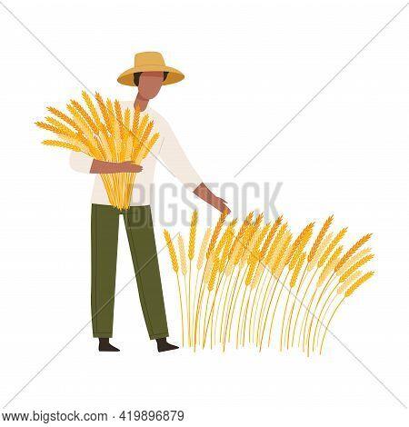 Man Farmer In Straw Hat Gathering Ears Of Wheat Vector Illustration