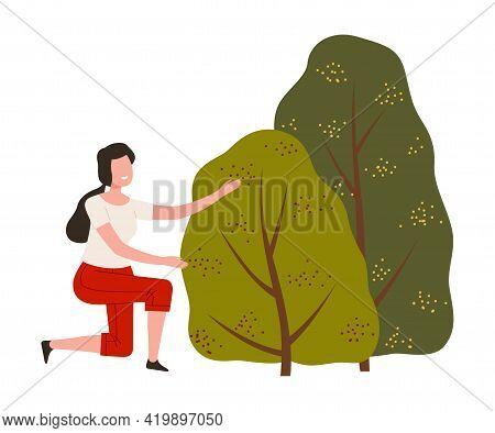 Woman Farmer Gathering Ripe Berry From Green Bush Vector Illustration
