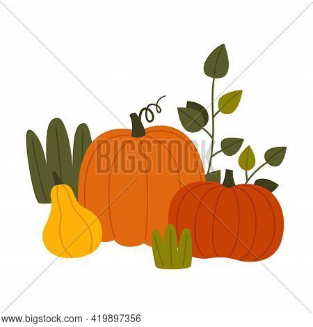 Ripe Pumpkin Vegetable As Seasonal Harvesting And Yield Vector Illustration
