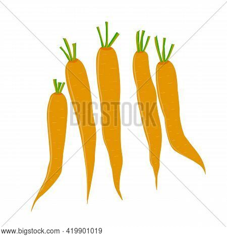 Set Of Carrots. A Bunch Of Carrots. Garden Vegetables. Vitamins And Caratin. Stock Vector Illustrati