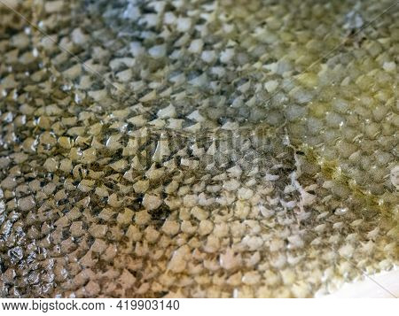 The Texture Of A Damp Patchy Surface Of A Fish Skin, Peeled From Scales. Background With Fish Skin.