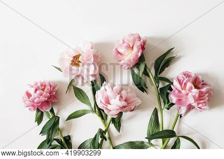 Blooming Pink Peonies Flowers With Green Leaves Isolated On White Table Background. Floral Frame, Ba