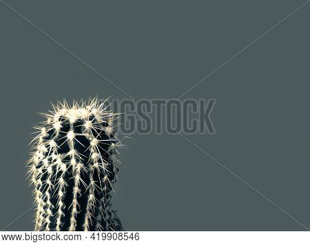 Close-up Of A Cactus In A Home Environment, Isolated Against The Background Of A Popular Color In 20