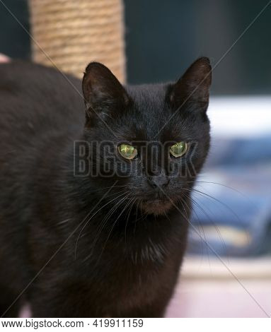 Black Old 20 Year Old Cat Close Up