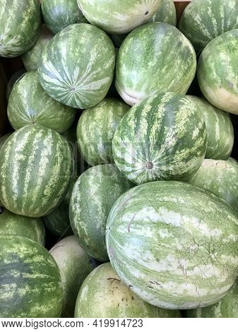 Big Green And Yellow Watermelons, Background Of Green Watermelons
