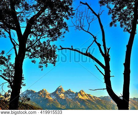 Grand Tetons, Between 2 Silhouetted Trees, Grand Teton National Park, Wyoming.