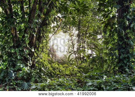 Green tropical forest