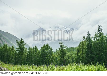 Scenic Alpine Landscape With Grassy Glade Near Forest Edge Against Big Snowy Mountain In Low Clouds.