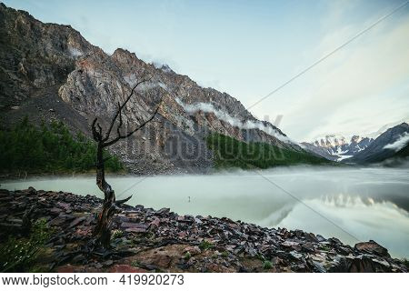 Scenic Alpine Landscape With Dry Tree On Shore Of Green Mirror Mountain Lake And Snowy Mountains In