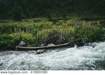 Beautiful Landscape With Wild Thickets And Rotten Tree Trunk Near Clear Water Of Mountain River. Col