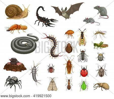 Pests Insects Disinfection, Animals Deratization. Cartoon Vector Snail, Scorpion And Bat, Mouse, Rat