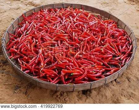 The Top View Of Dried Red Chillies. Spicy Flavor. Used For Seasoning Curry And Tom Yum.