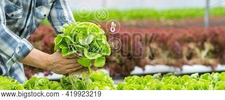 Farmer Holding Hydroponic Vegetable In Farm, Natural Organic Plant Growth, Non-toxic