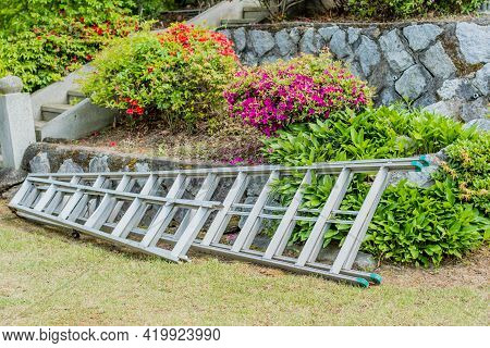 Metal Ladders Laying On Lawn Beside Flowerbed Of Purple And Red Flowers.