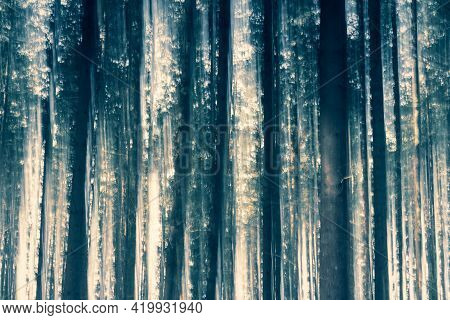 Trees In Magical Light And Magic Foggy Forest Tree Landscape. Light Effect. Nature Background. With