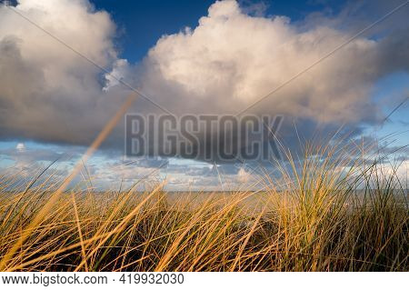 Waving Dune Grass With Cumulus Clouds Above The North Sea Coastline Of The Netherlands