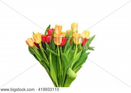 Bouquet Of Red And Yellow Tulips In A Vase Isolated On White Background. Spring And Summer Backdrop.