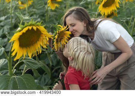 Young Mother And Little Boy Are Sniffing Sunflower. Trusting Relationship Between Son And Mother.