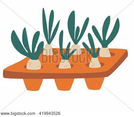 Seedlings In The Tray. Illustration Featuring A Seedling Tray Filled With Saplings. Domestic Oranger