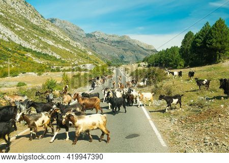 Albanian Nature Along With A Herd Of Goats. Near Theth National Park, Albania. The Theme Is Nature,