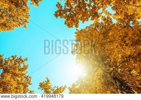 Autumn Yellow Trees With Blue Sky And Sun.