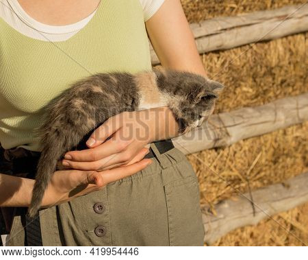 Hands Of Young Woman Are Holding Kitten On Background Of Hay In Village. Autism And Real Life. Unrec